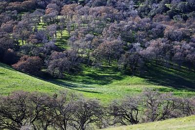 Los Vaqueros hike Dec18  055
