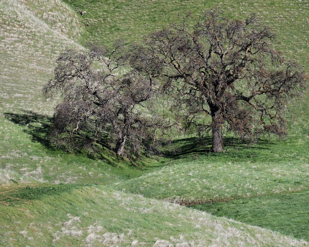 Los Vaqueros hike Dec18  135