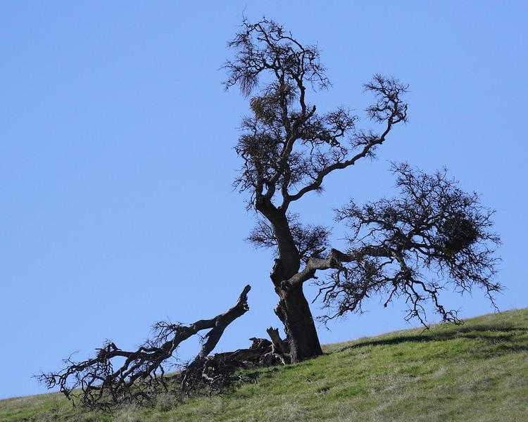 Los Vaqueros hike Dec18  050