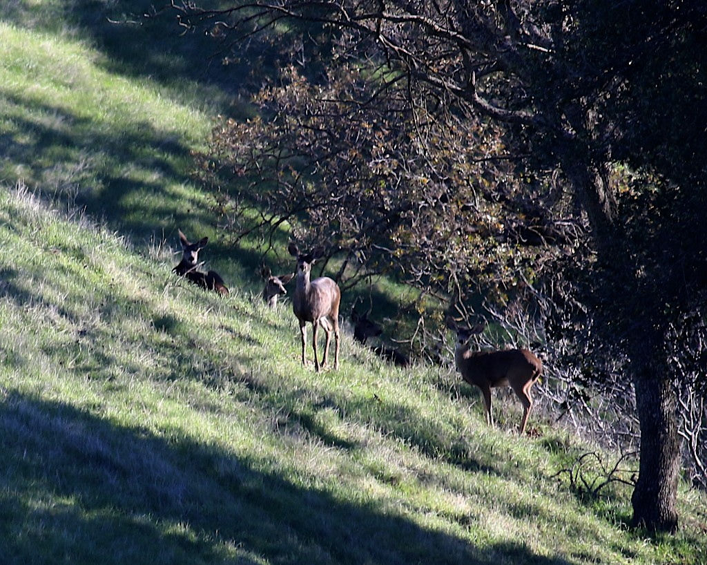 Los Vaqueros hikes Dec17  007