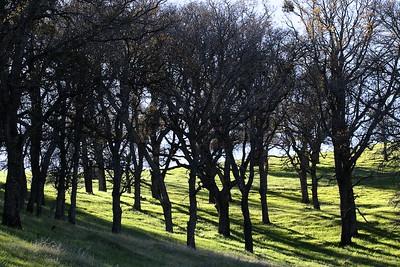 Los Vaqueros hikes Dec17  056