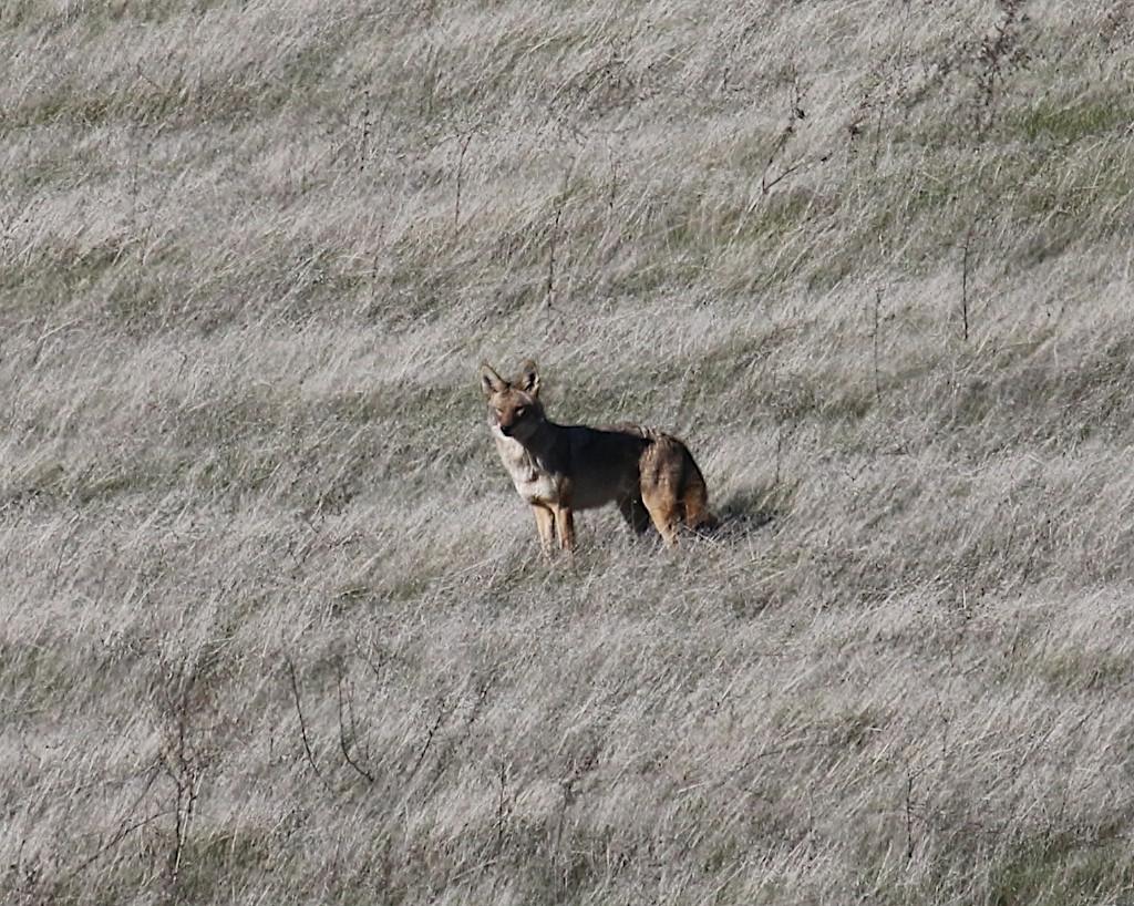 Los Vaqueros hikes Dec17  071
