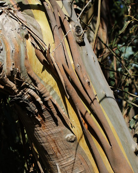 Lynch Canyon hike Dec4  066
