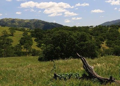 Del Valle Apr14  27