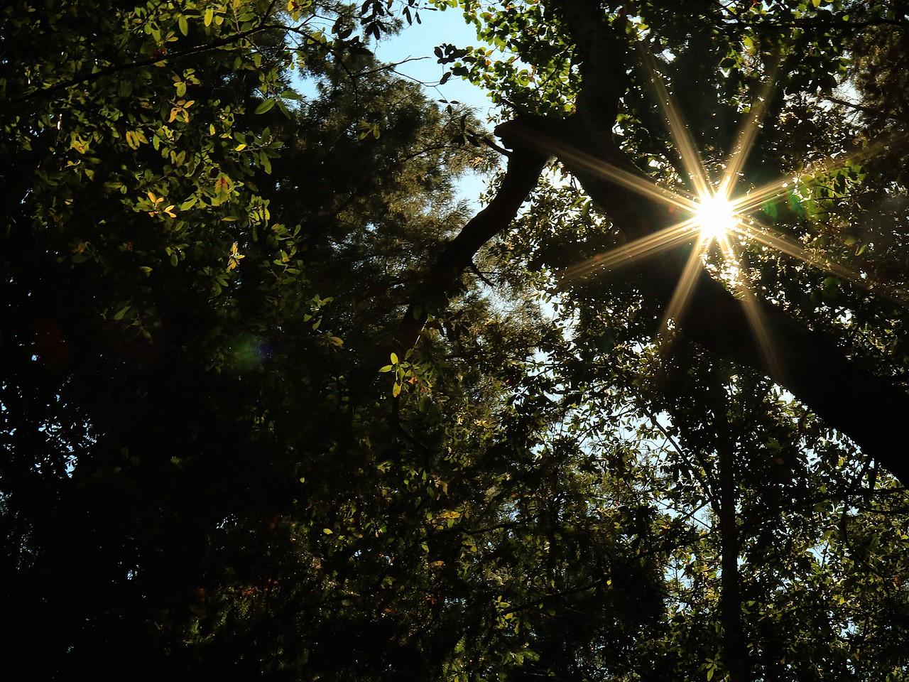 Fall Creek hike July9  073