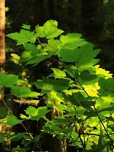 Fall Creek hike July9  006