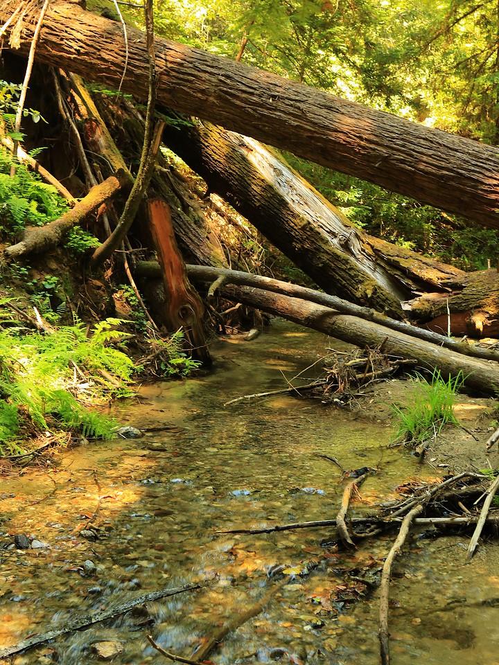 Fall Creek hike July9  064