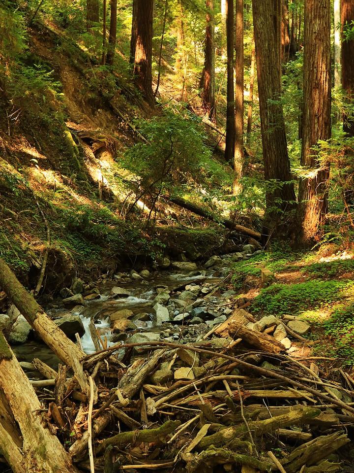 Fall Creek hike July9  047
