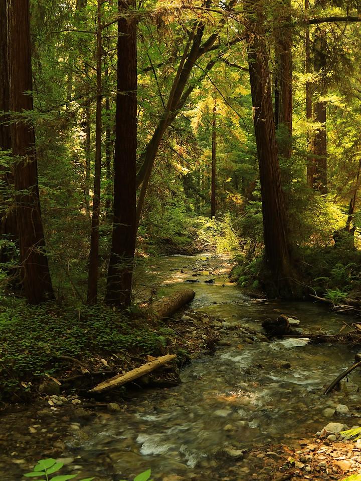 Fall Creek hike July9  010