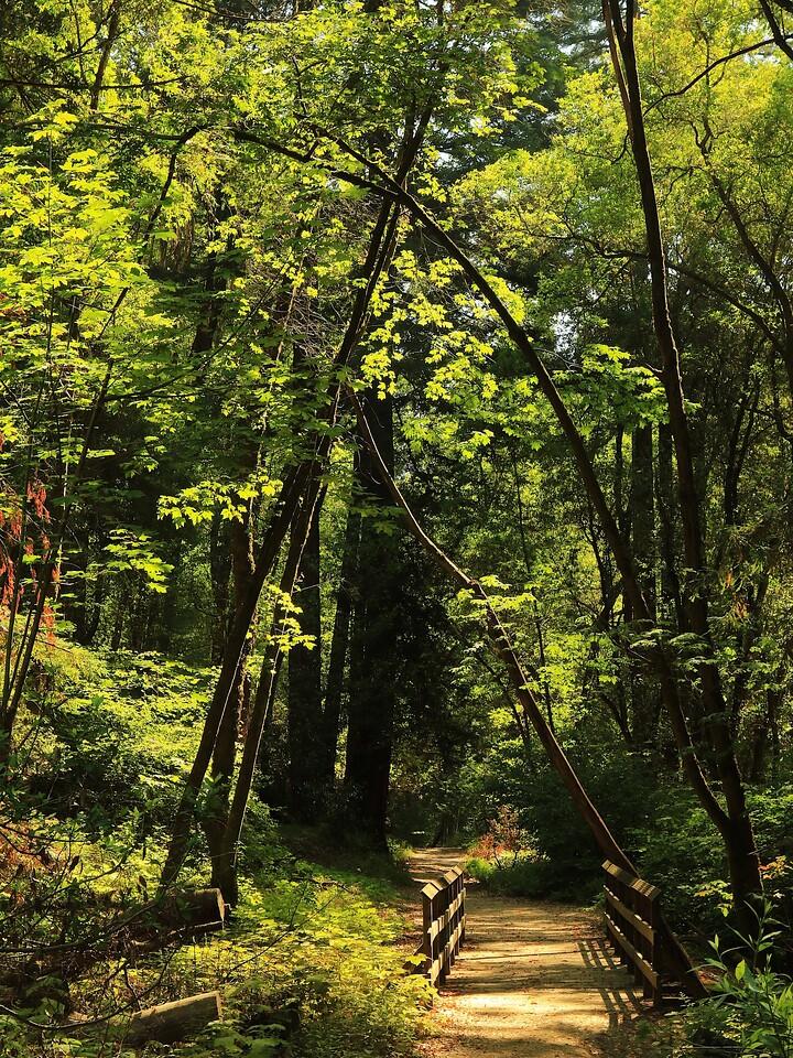 Fall Creek hike July9  002