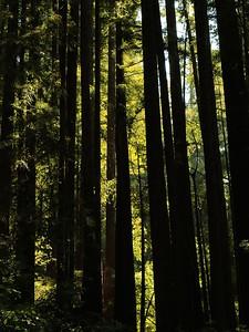 Fall Creek hike July9  043