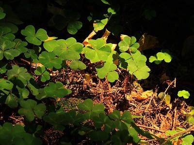 Fall Creek hike July9  035