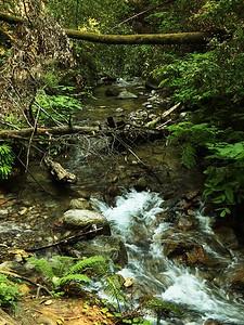 Fall Creek hike July9  022