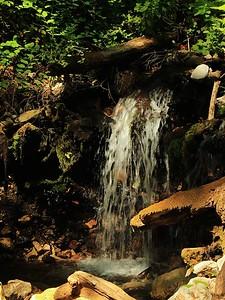 Fall Creek hike July9  030