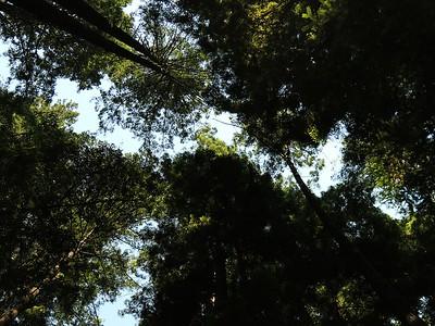 Fall Creek hike July9  034
