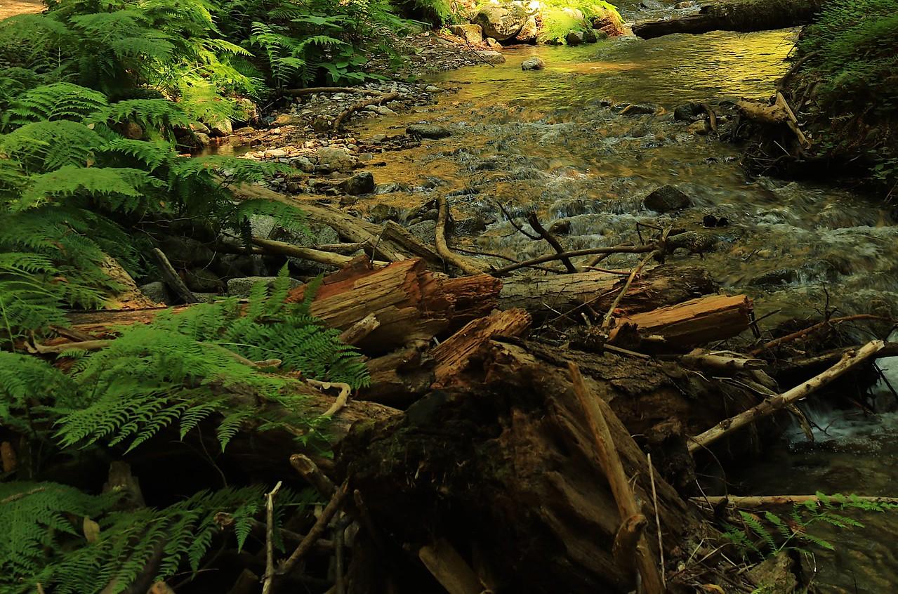 Fall Creek hike July9  008