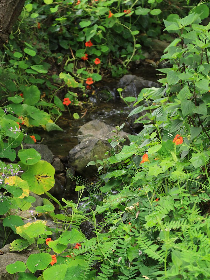 MtTam hike July2  125