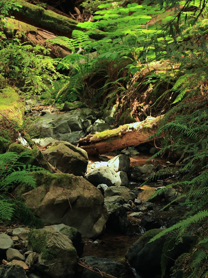 MtTam hike July2  209