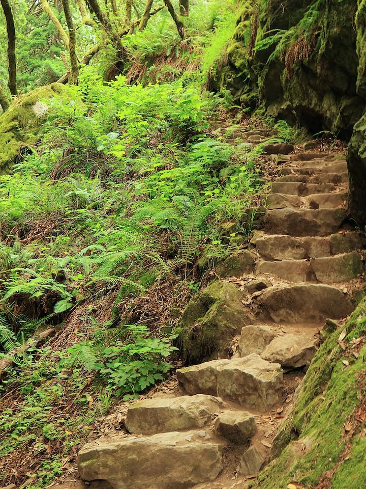MtTam hike July2  178