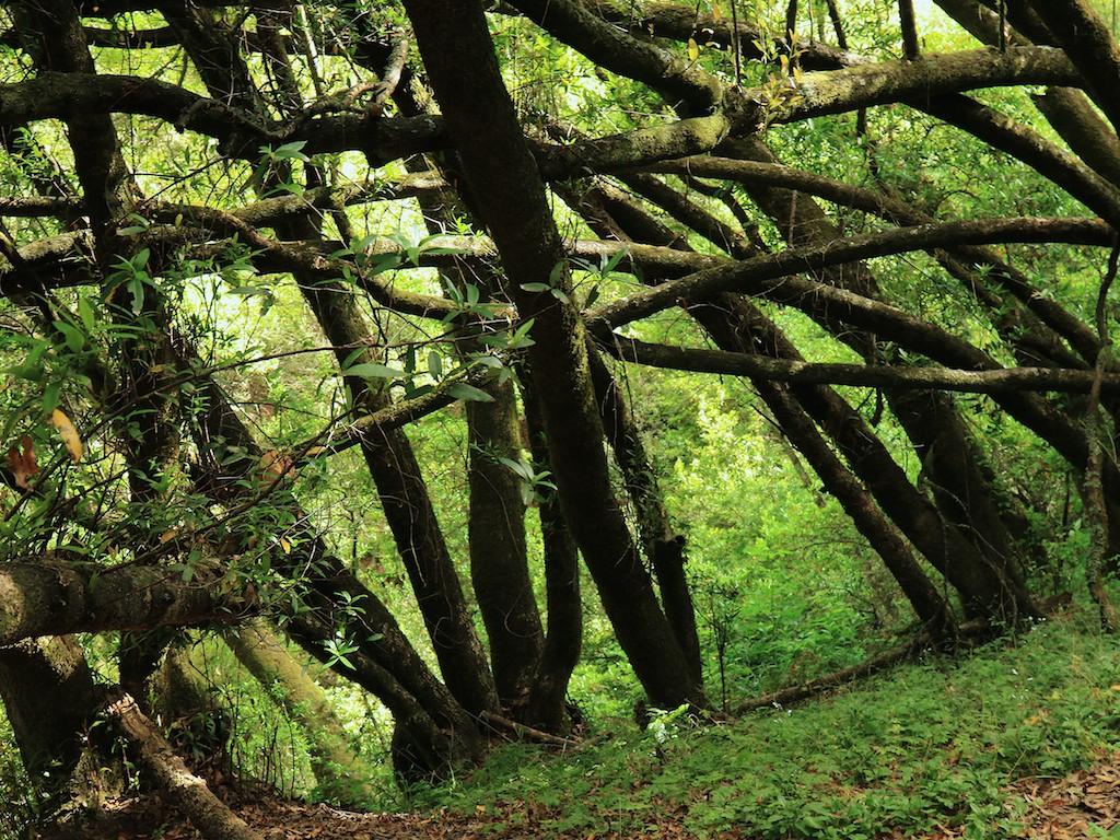 MtTam hike July2  098