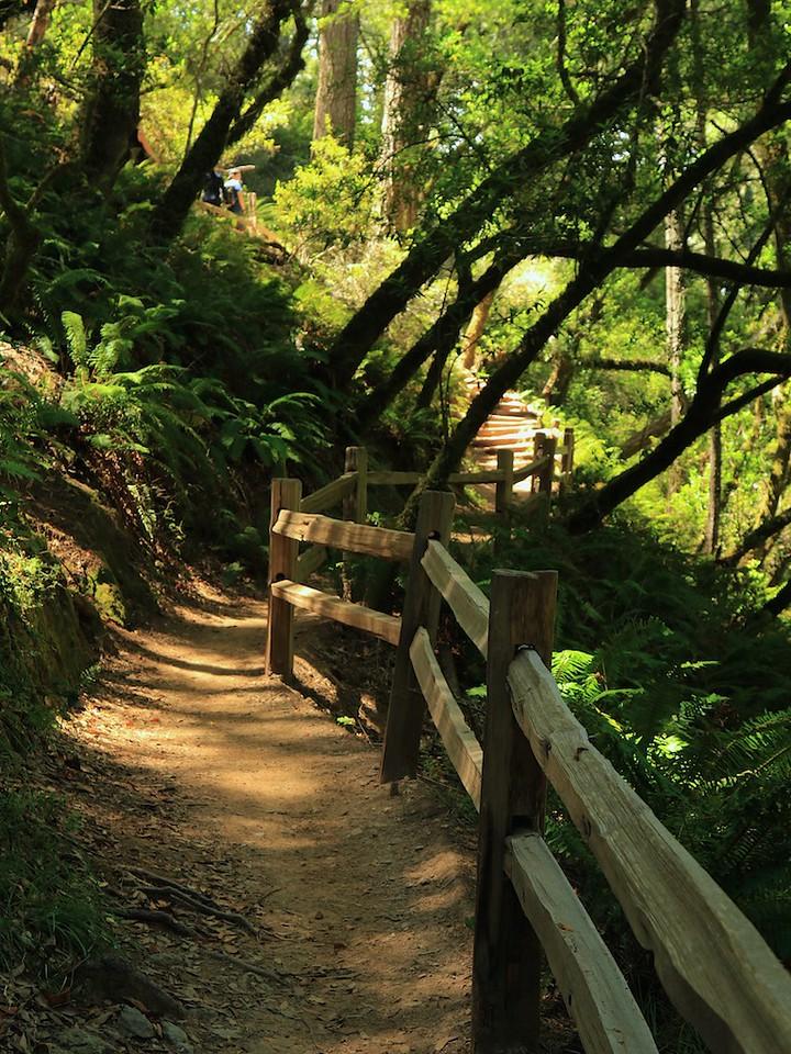 MtTam hike July2  219