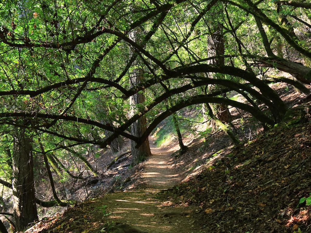 MtTam hike July2  019