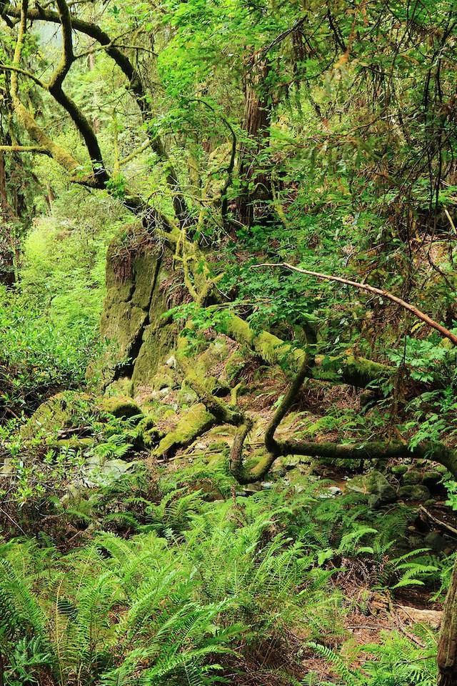 MtTam hike July2  205