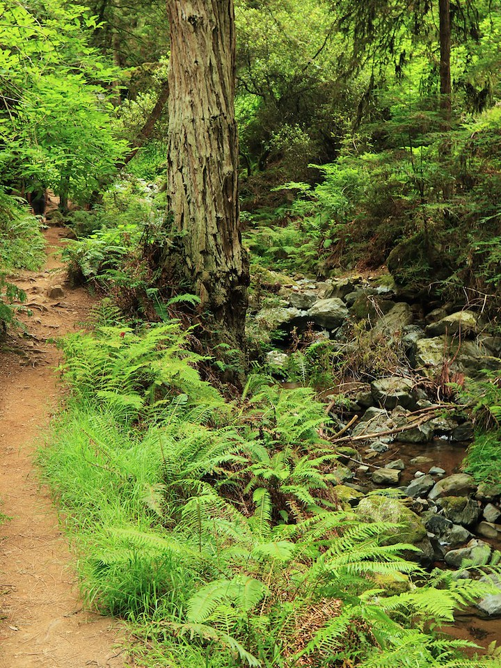 MtTam hike July2  189