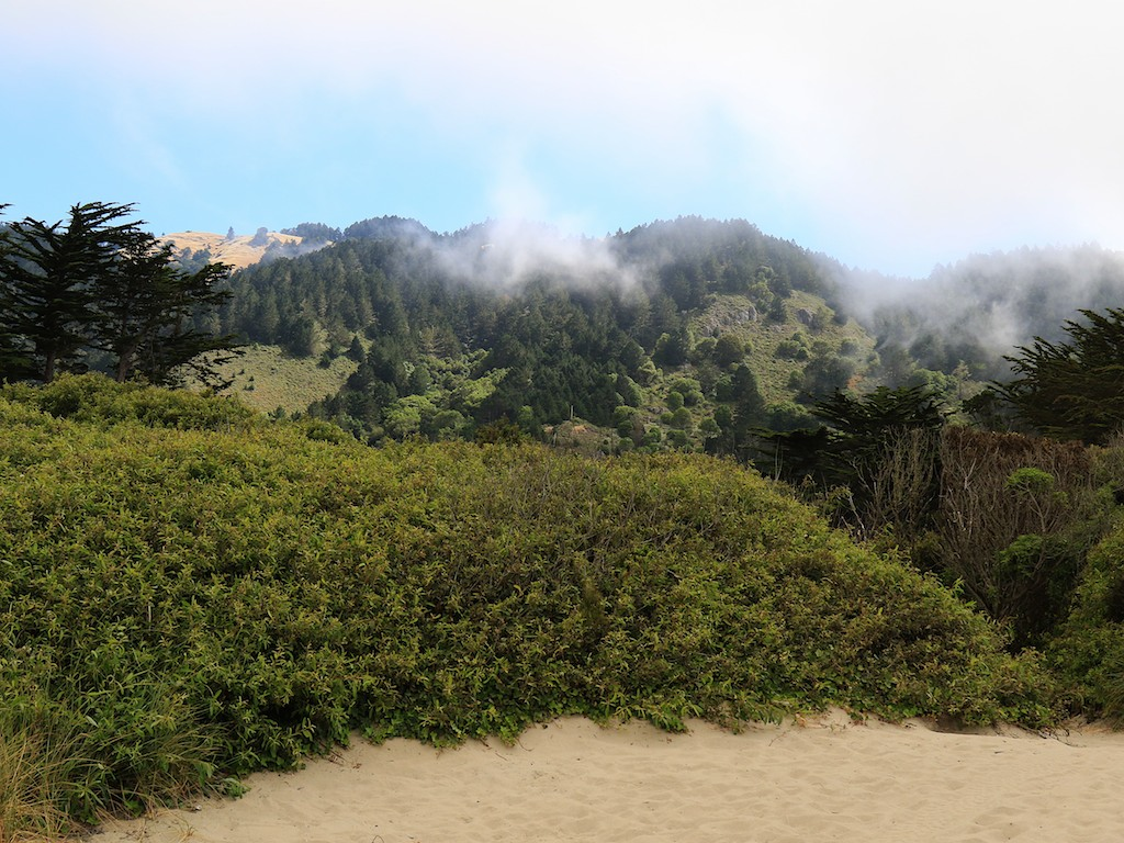MtTam hike July2  129
