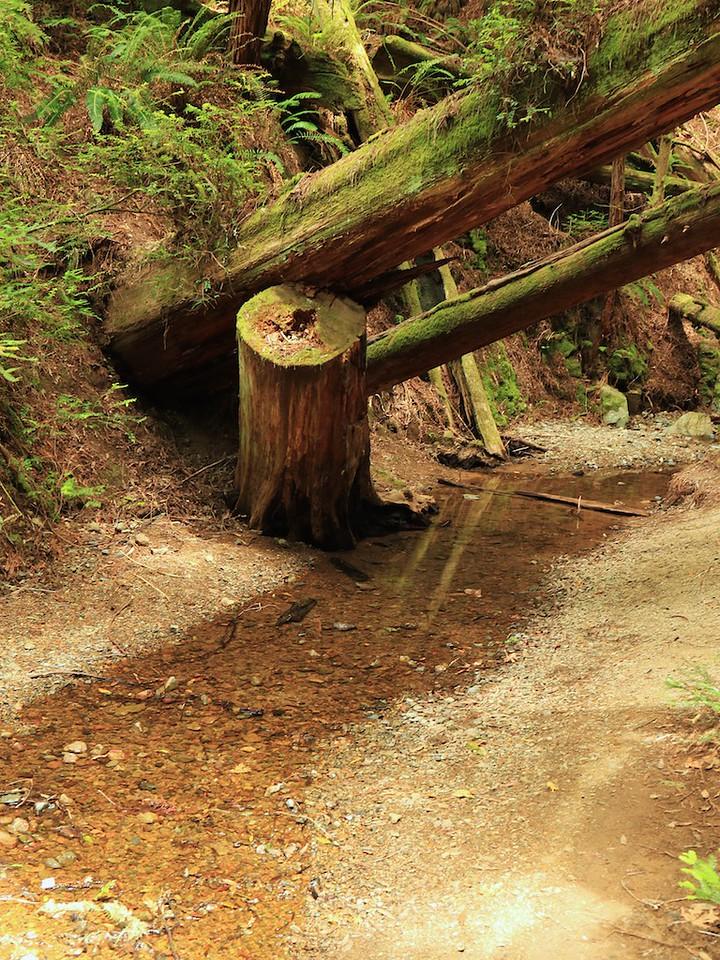 MtTam hike July2  210
