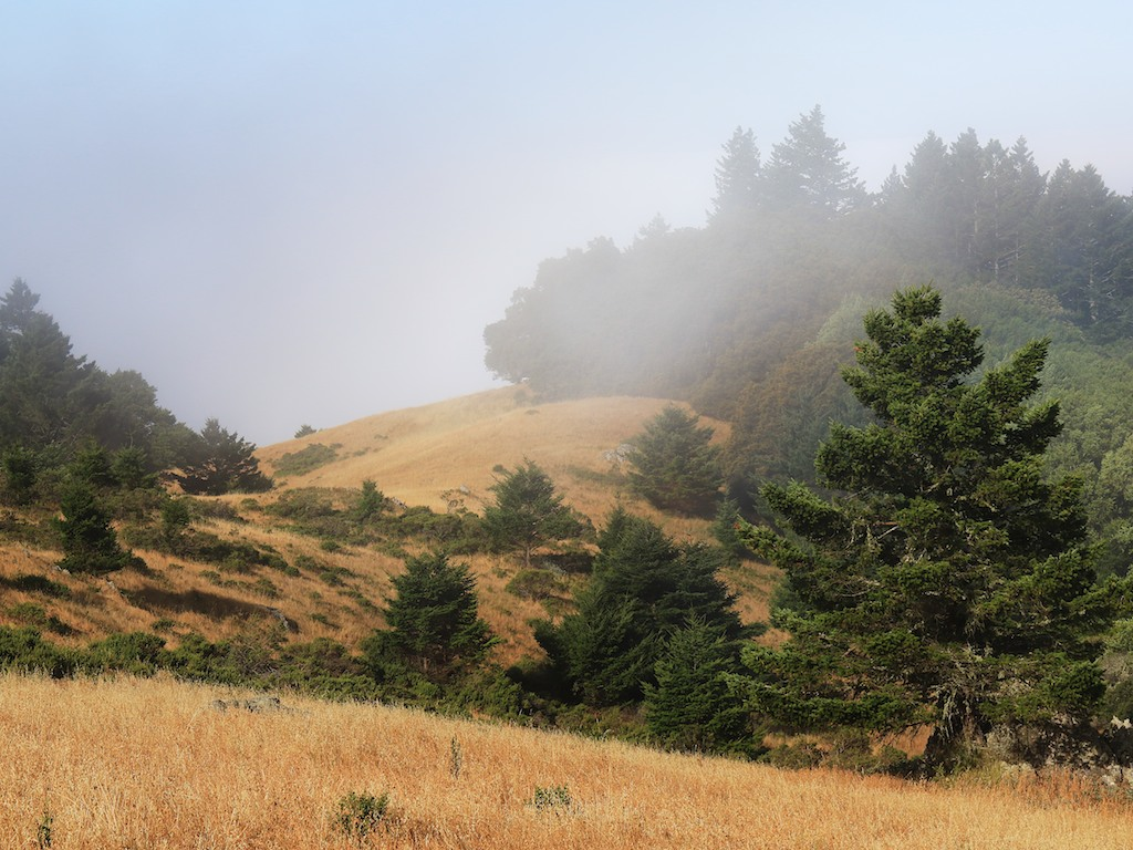 MtTam hike July2  034