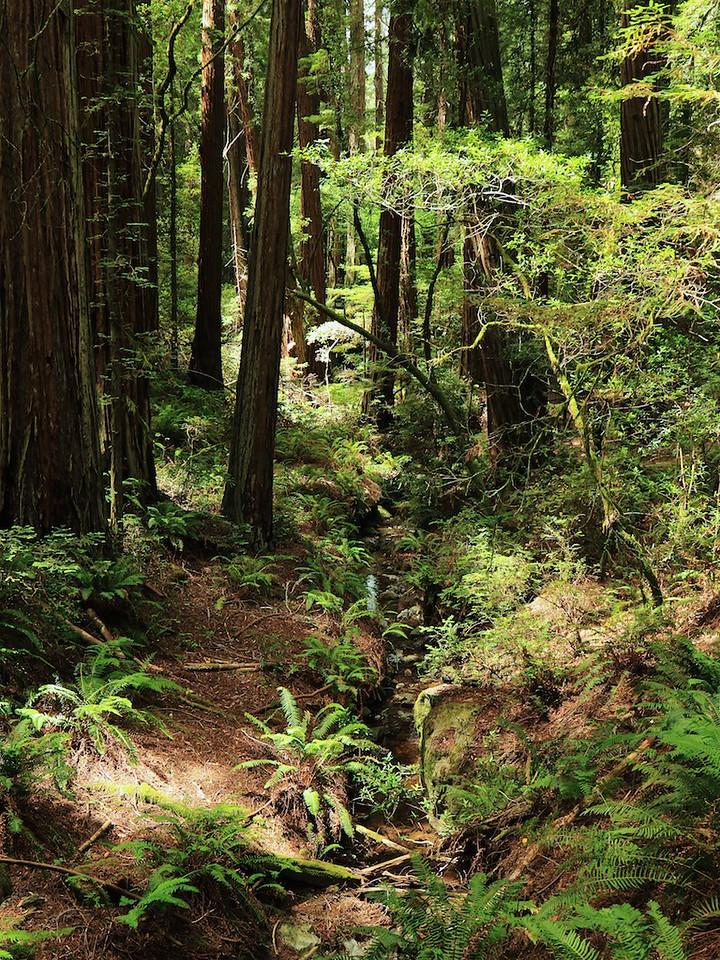 MtTam hike July2  214