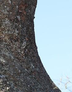 Pinnacles Apr23  56