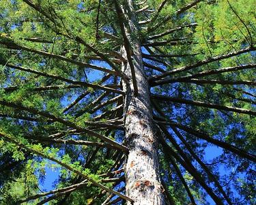 Purisima Creek Redwoods hike Sept 24th