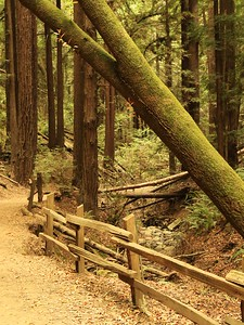 Redwood Park hike Aug 4th