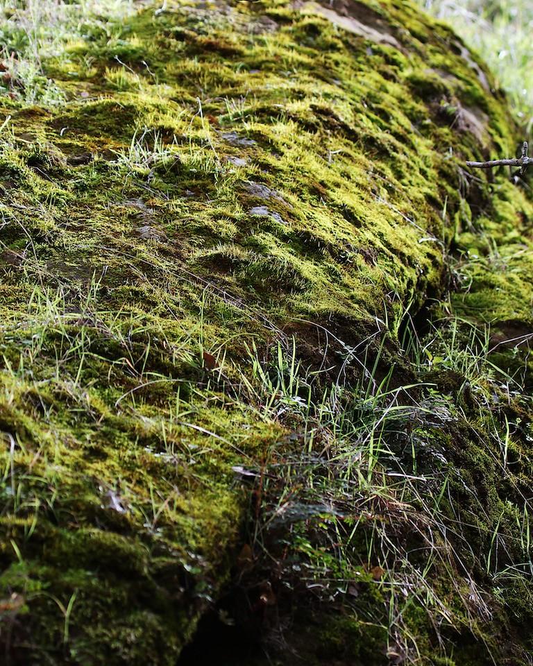 Round Valley hike Jan1  116