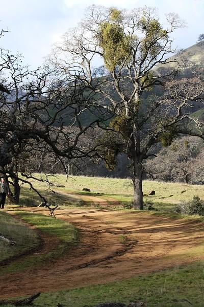 Round Valley hike Jan1  022