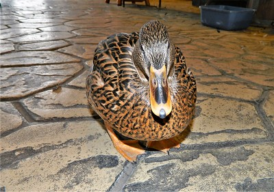 Frankie the nature center's mascot.