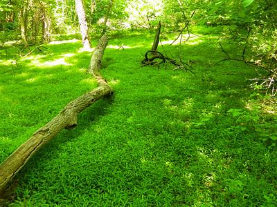 Field of grasses.