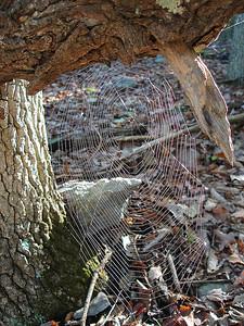 A spider web glissens in the sun