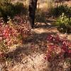 Poison Oaks...pretty but deadly...