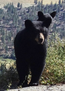 So...after confronting a protective Momma Black Bear and cub on the trail to Mt. Brew in Lillooet - decided to go to climb and camp at Mt. Outram just West of Manning Park.