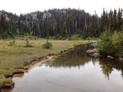 Lots of water on this trail - but we didn't see any moose.