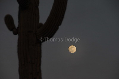 Moonrise over Saguaro, Lost Dutchman State Park, Superstition Mountains, AZ.