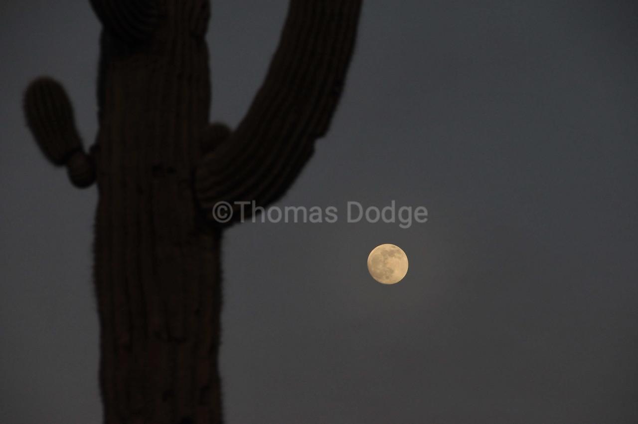 Moonrise over Saguaro, Lost Dutchman State Park, Superstition Mountains, AZ.