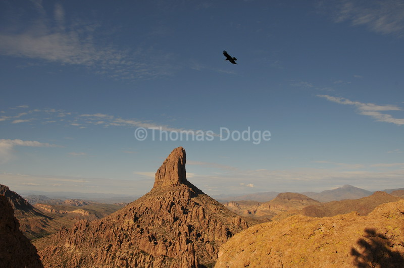 Weaver's Needle monolith, and crow, Superstition Wilderness Area, AZ.