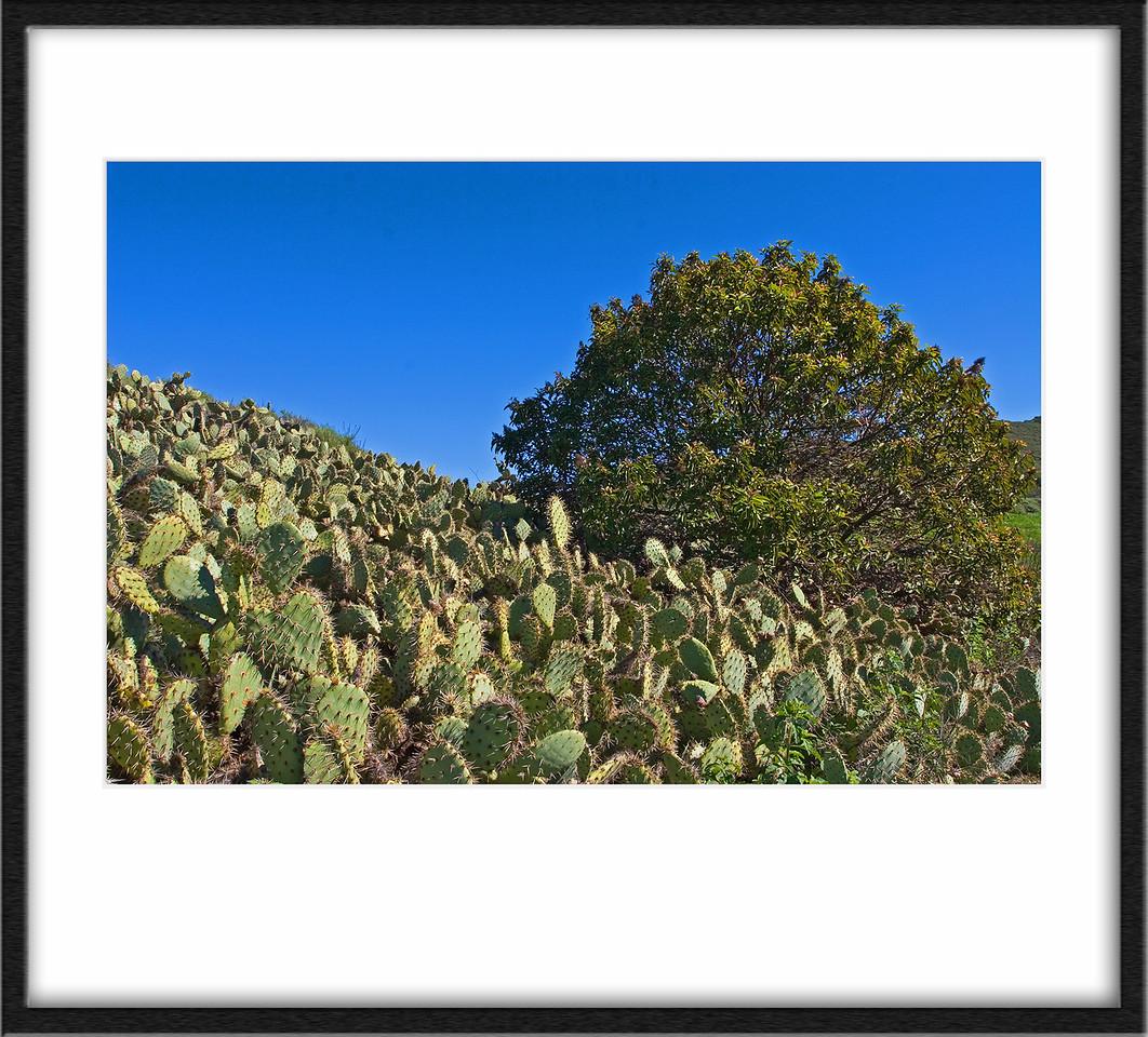 Cactus clump.