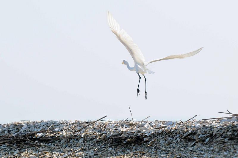 HHI Bird Expedition-004