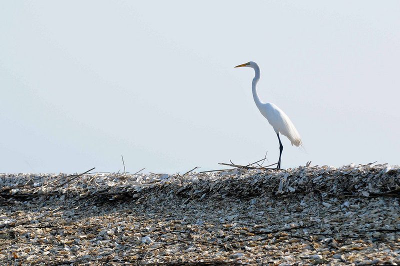 HHI Bird Expedition-003