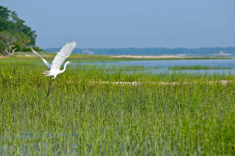 HHI Bird Expedition-017